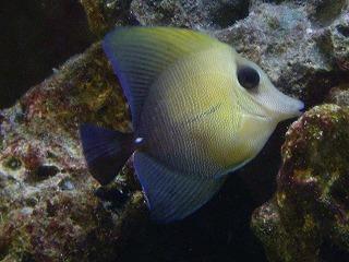 海水魚 (3)