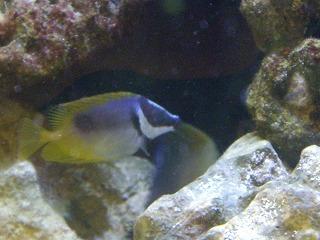 海水魚 (2)
